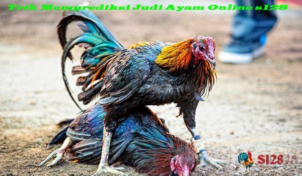 Trik Memprediksi Judi Ayam Online s128